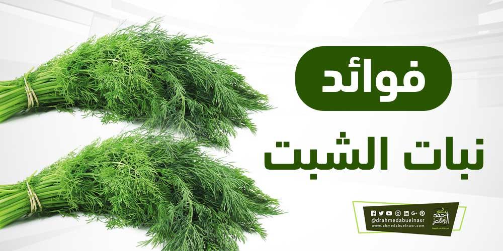 _الشبت.jpg